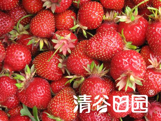 Sumer strawberry