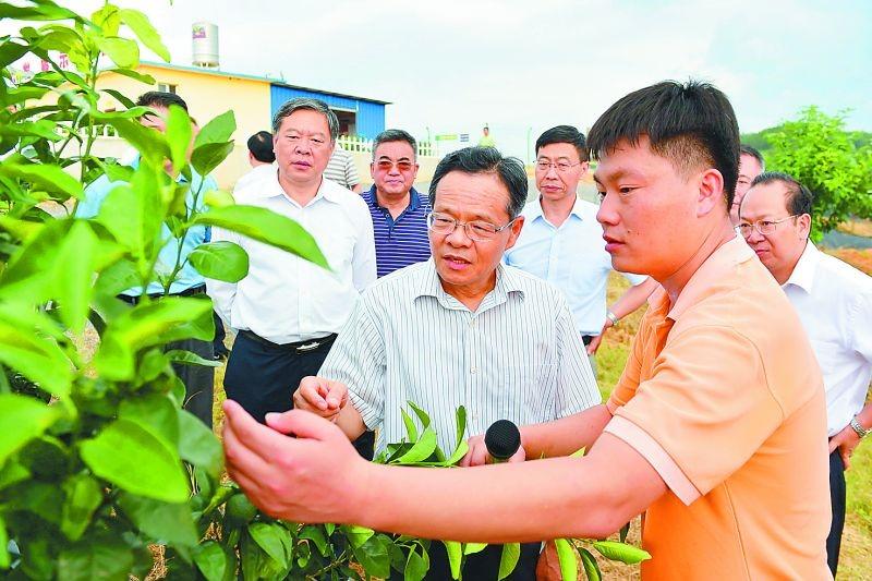 广西壮族自治区主席陈武在来宾uwin电竞app现代柑橘产业园调研