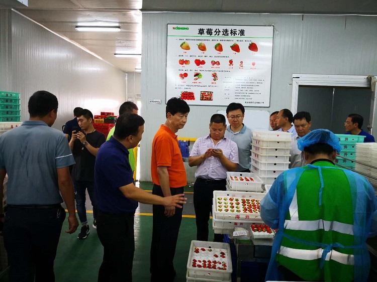 杨亚林书记一行参观海升中国莓谷自动化分选线