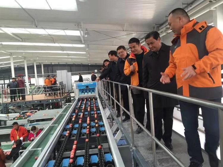 河南省副省长武国定赴洛宁县上戈镇uwin电竞app矮砧苹果示范园考察